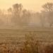 Ködös reggelen