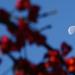 Holdbogyók