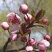 Tavasz van