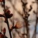 Album - Virágzó fák