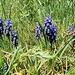 Gellérthegyi növények
