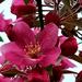 Virág szirmok