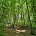 Lillafüredi erdő