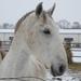 A fehér ló fia...