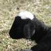 A család fekete báránya...