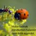 haikuk 86