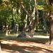Fák a Margitszigeten