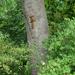 Mókuska felmászott a fára...