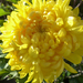 Novemberi virágok az otthoni kertünkben, SzG3