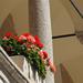 Pozsony, a Régi Városháza, SzG3