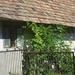 Zsámbék - 6- régi ház-1