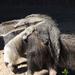 Állatkert elefánttornával