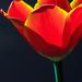 Virágok, szépségek és még szebbek