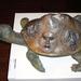 Stössel Nándor-teknős