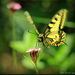 Lepkék, rovarok