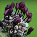Virágpamacs