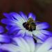 Lilás méhes