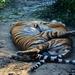 a természet csodája... (állatkerti fotó)