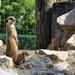 van mire vigyázni...(állatkerti fotó)