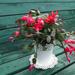 Novemberi virágzás