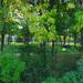 Reggel a parkban