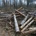 Kivágott fák