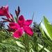 Első virágok