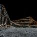 Holdbéli táj
