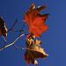 Még mindig ősz
