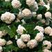 virágok 15