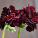 virágok 17