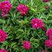 virágok 24