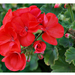 virágok 54