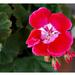 virágok 55