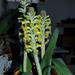 virágok 63