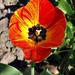 virágok 73