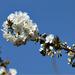 virágok 78