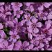 Virágok 82