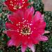 Kaktusz 2013 16