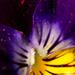 azsoltt-május-indafoto-640x960