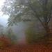 10 Ködös erdő II.