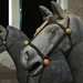 15 Életnagyságú lovak