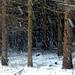 04 Tél a Medvesen