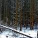 14 Tél a Medvesen