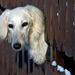 10 Kiváncsi kutya