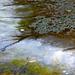 01 Jég és vízinövények