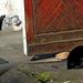 11 Fekete macskák