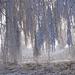 09 Két nyírfa között