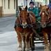 01 Falun még dívik a lovaskocsi