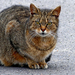 05 somoskői cica